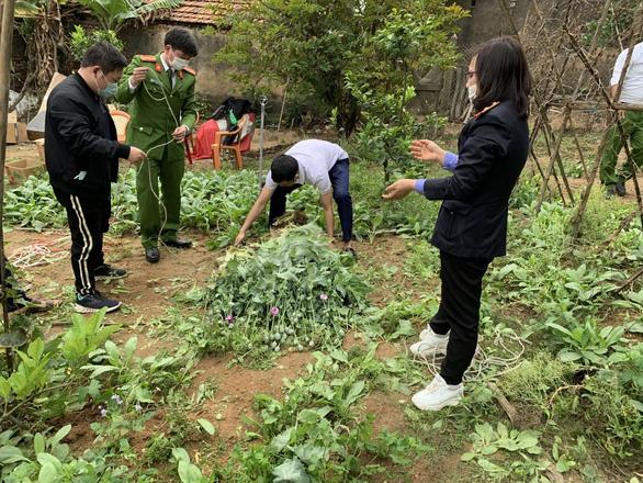Phát hiện người đàn ông trồng gần 3.000 cây cần sa, anh túc trong vườn nhà - Ảnh 1.