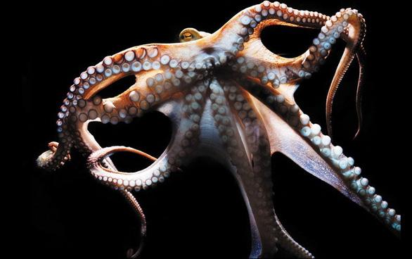 'Siêu năng lực' cảm nhận ánh sáng của bạch tuộc - Ảnh 3.