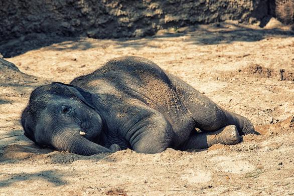 Hành động ngay trước khi voi, tê tê chỉ còn là một ký ức - Ảnh 1.
