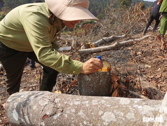 Xác định 2 nghi can phá rừng phòng hộ ở Đà Lạt - Ảnh 2.
