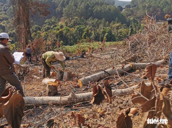 Xác định 2 nghi can phá rừng phòng hộ ở Đà Lạt - Ảnh 1.