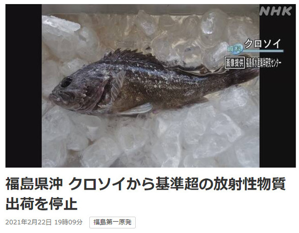 Nhật phát hiện cá nhiễm phóng xạ ở Fukushima - Ảnh 1.