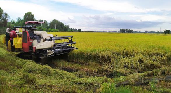 Nông dân trồng lúa thắng lớn - Ảnh 1.