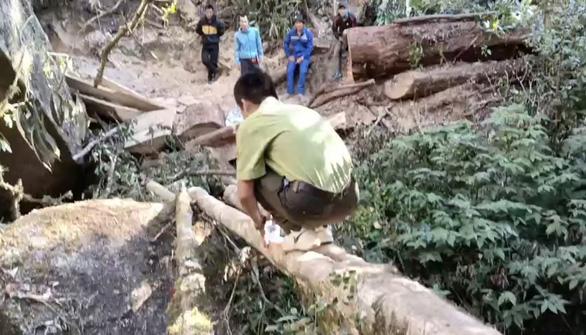 Đề xuất lắp camera để giám sát rừng, phòng ngừa lâm tặc - Ảnh 3.