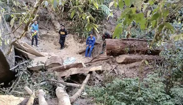 Đề xuất lắp camera để giám sát rừng, phòng ngừa lâm tặc - Ảnh 2.