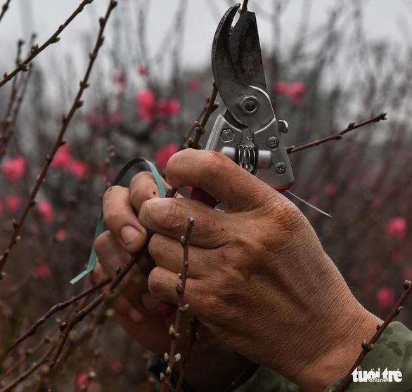 Gần tết, hoa thì tươi mà lòng người thì héo - Ảnh 4.