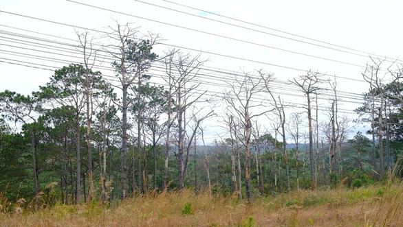 48 năm tù cho nhóm bức tử rừng thông chiếm đất ven quốc lộ 14 - Ảnh 4.