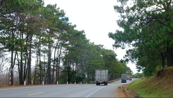 48 năm tù cho nhóm bức tử rừng thông chiếm đất ven quốc lộ 14 - Ảnh 3.