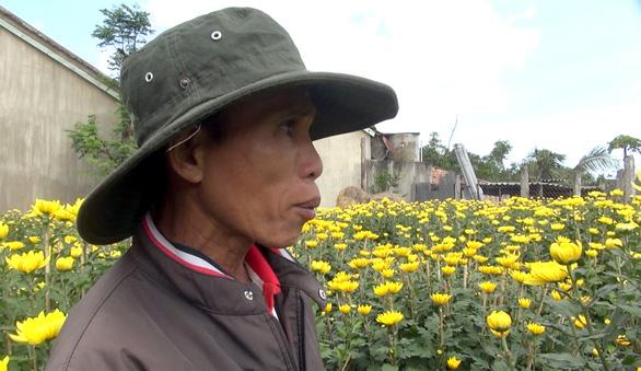 Thương lái bỏ cọc, người trồng hoa tết Phú Yên như 'ngồi trên lửa' - Ảnh 1.