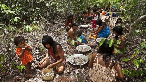 Cuộc chiến phủ lại rừng xanh - Kỳ 5: Những hạt giống nhiệm mầu ở Brazil - Ảnh 1.