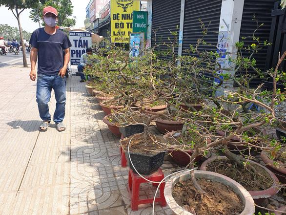 Thị trường mai tết sôi động dần, khách chuộng cây giá thấp - Ảnh 8.