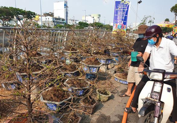 Mang 1.000 cây đào vào Sài Gòn, 3 ngày bán được 10 cây... - Ảnh 2.