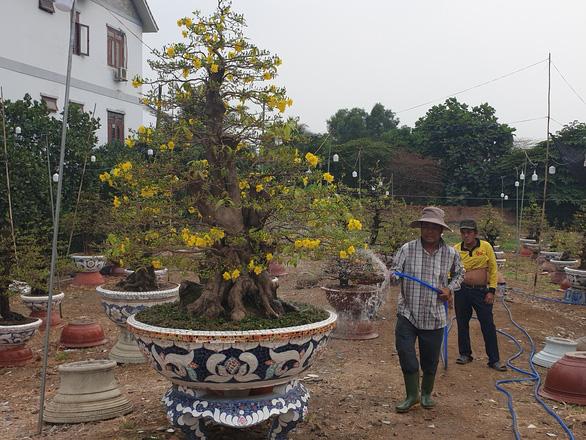 Sức mua chậm còn gặp mưa, người bán hoa trái ở Sài Gòn lo sốt vó - Ảnh 2.