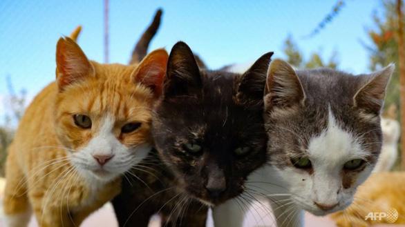 Hàn Quốc xét nghiệm COVID-19 cho chó và mèo có triệu chứng sốt, ho - Ảnh 1.