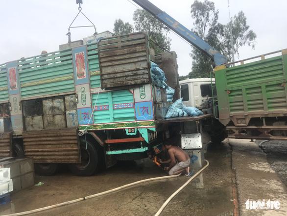 Campuchia cho phép nhập khẩu trở lại 4 loài cá từ Việt Nam - Ảnh 3.