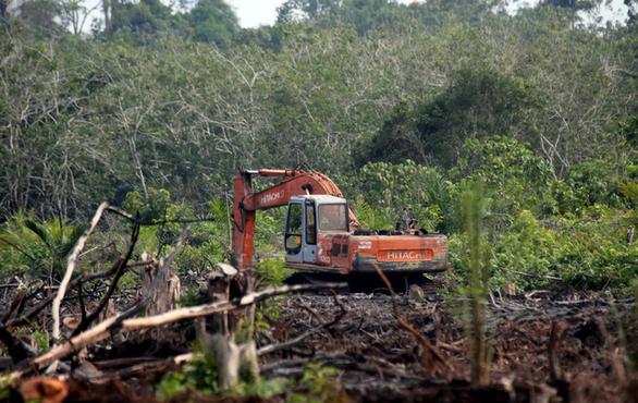 Chỉ 1/3 rừng mưa nhiệt đới trên Trái đất còn nguyên vẹn - Ảnh 2.