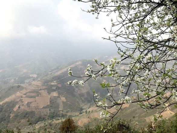 Lên Tà Xùa ngắm rừng hoa táo mèo giữa lưng chừng trời - Ảnh 6.