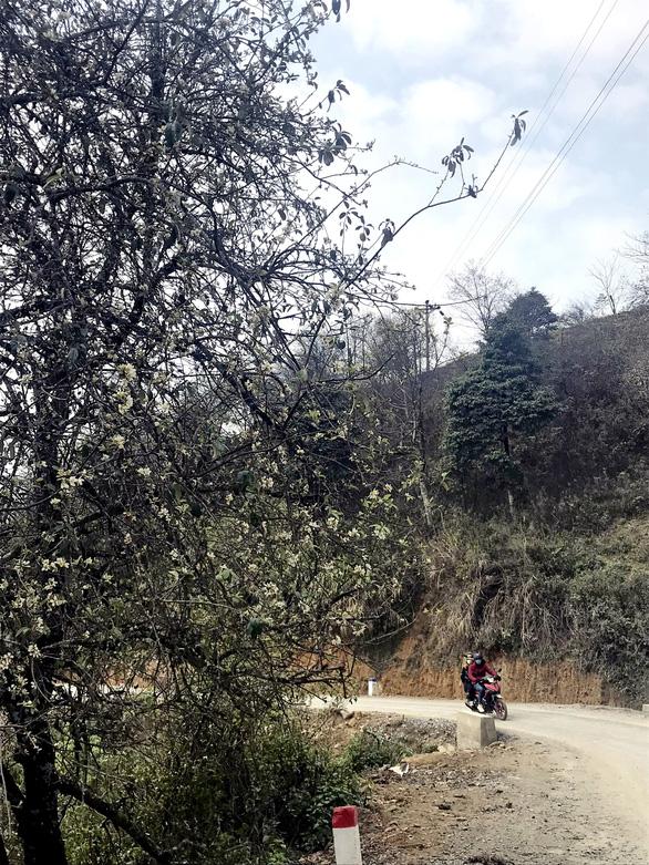 Lên Tà Xùa ngắm rừng hoa táo mèo giữa lưng chừng trời - Ảnh 2.