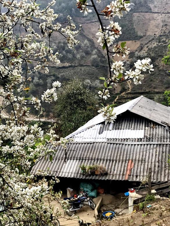 Lên Tà Xùa ngắm rừng hoa táo mèo giữa lưng chừng trời - Ảnh 4.