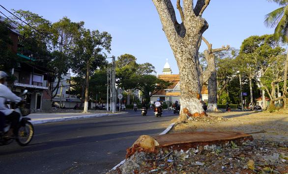 Bí thư Vũng Tàu nhận khuyết điểm không tuyên truyền vụ cưa hàng cây cổ thụ - Ảnh 2.