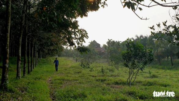 Giám đốc lâm trường lấn chiếm đất rừng vẫn được bổ nhiệm lại - Ảnh 1.