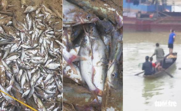 Cá chết nổi trắng sông ở Nghệ An, dân vớt đem ra chợ bán - Ảnh 2.