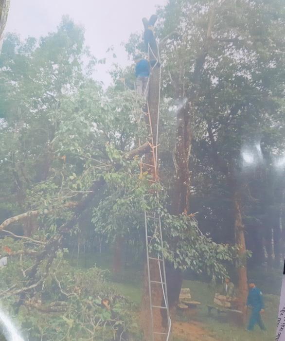 Dọn cây rừng sau bão ở di tích Mỹ Sơn đem bán khi chưa được phép - Ảnh 4.