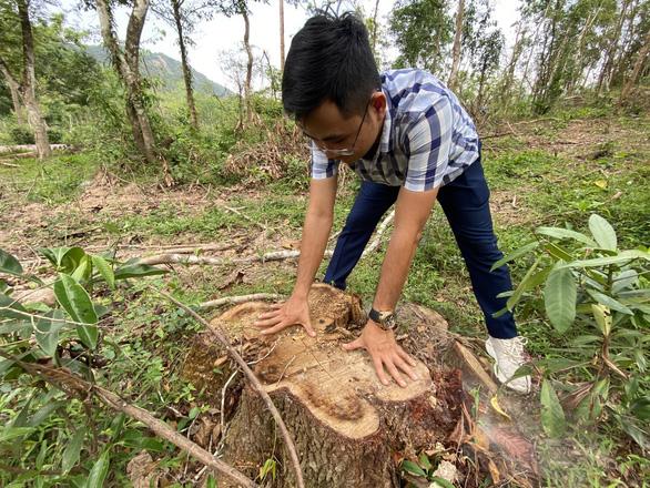 Dọn cây rừng sau bão ở di tích Mỹ Sơn đem bán khi chưa được phép - Ảnh 5.