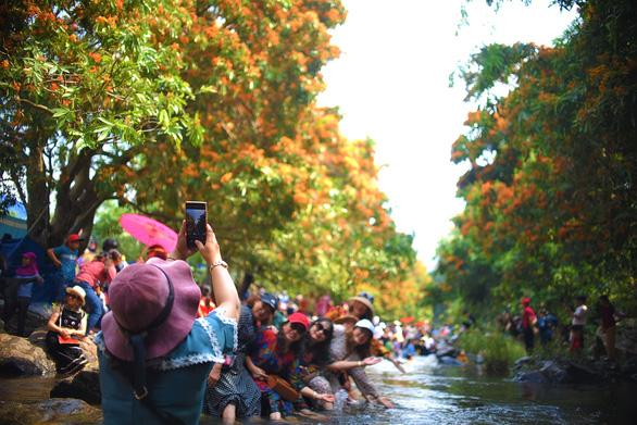 Suối Tà Má rực rỡ hoa trang rừng chưa bao giờ đẹp như năm nay - Ảnh 3.