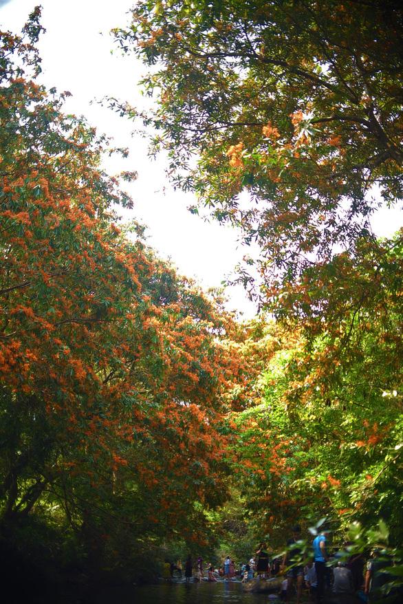 Suối Tà Má rực rỡ hoa trang rừng chưa bao giờ đẹp như năm nay - Ảnh 5.
