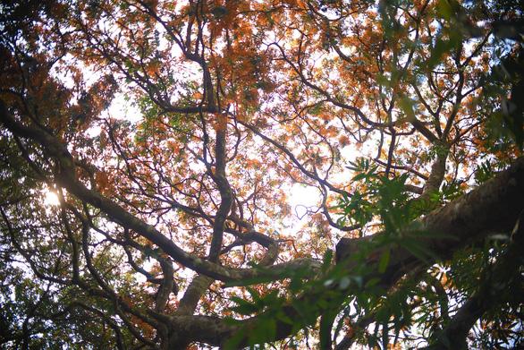 Suối Tà Má rực rỡ hoa trang rừng chưa bao giờ đẹp như năm nay - Ảnh 8.