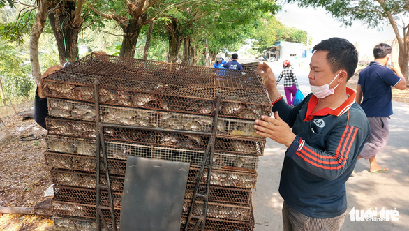 Nhộn nhịp chợ chuột đồng nơi biên giới: Mua bao nhiêu bán hết bấy nhiêu - Ảnh 2.