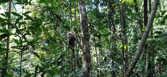 Thả khỉ đuôi lợn và trăn gấm do người dân giao nộp về rừng tự nhiên - Ảnh 1.