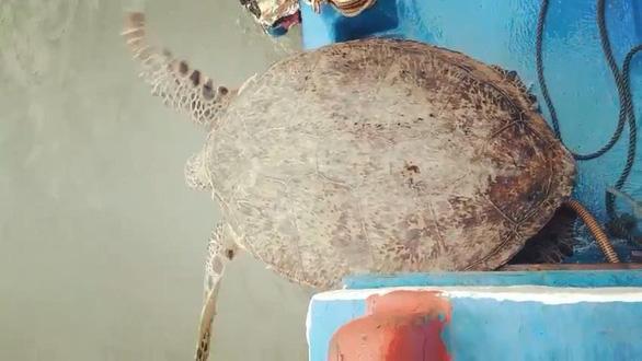 Thả rùa quý hiếm nặng 120kg về biển - Ảnh 2.