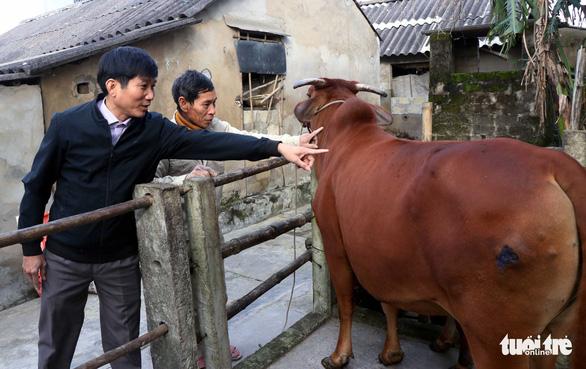 Hà Tĩnh: Nông dân lao đao với dịch tả heo và viêm da nổi cục trên trâu, bò - Ảnh 1.