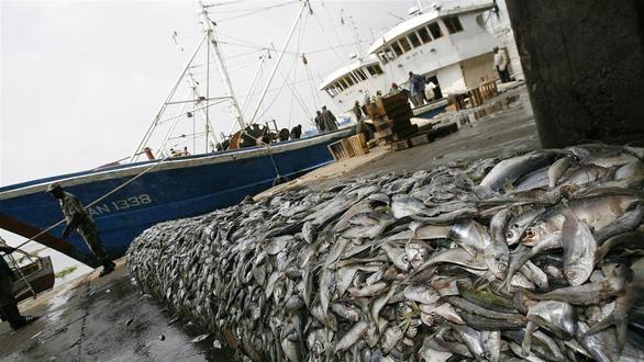 Các đội tàu cá Trung Quốc phát thải khí CO2 hàng đầu thế giới - Ảnh 1.