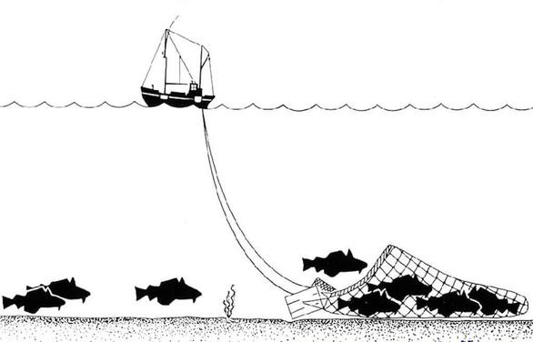 Các đội tàu cá Trung Quốc phát thải khí CO2 hàng đầu thế giới - Ảnh 2.