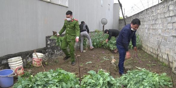Khởi tố cụ bà 72 tuổi trồng 600 cây thuốc phiện - Ảnh 1.