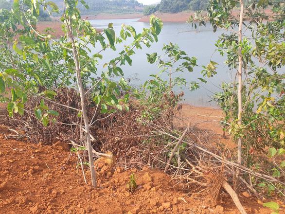 Tự ý san lấp 5.000m2 rừng phòng hộ thủy điện Đắk R'Tih - Ảnh 2.