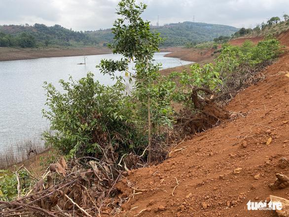 UBND TP Gia Nghĩa chưa biết chuyện phá 5.600m2 rừng phòng hộ và ai là thủ phạm - Ảnh 4.
