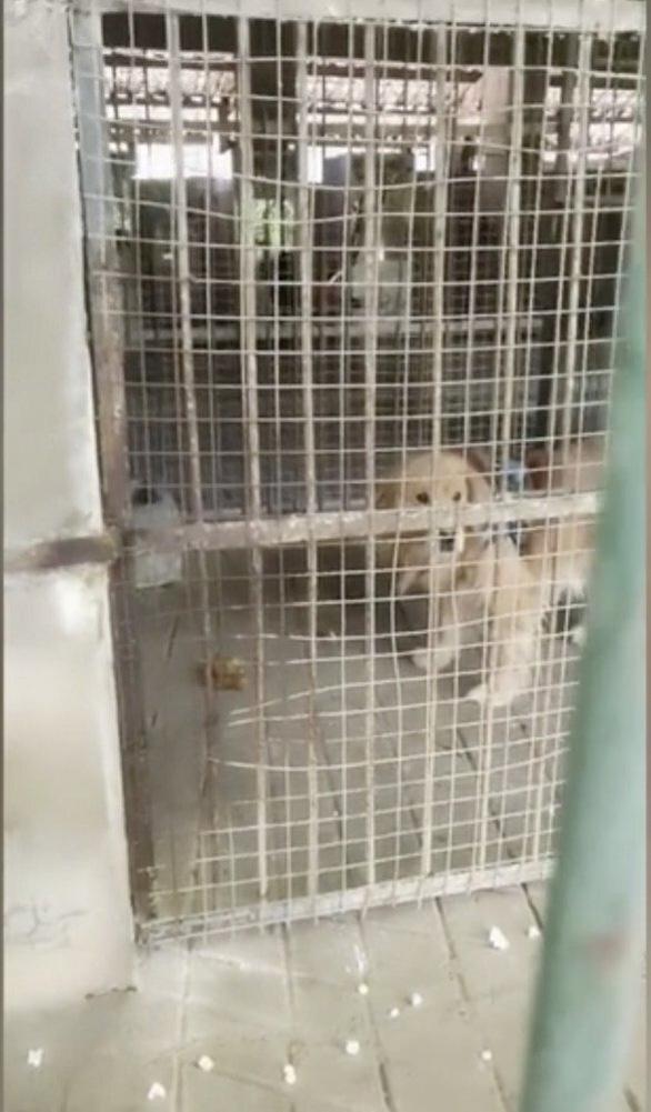 Sở thú Trung Quốc biến chó cảnh thành sư tử châu Phi để phục vụ du khách - Ảnh 3.