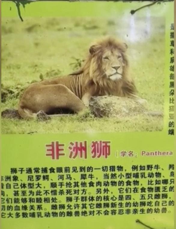 Sở thú Trung Quốc biến chó cảnh thành sư tử châu Phi để phục vụ du khách - Ảnh 2.