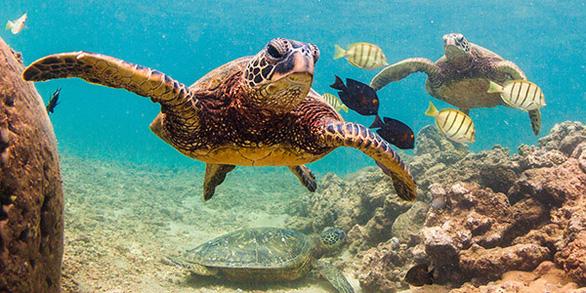 Giới khoa học bối rối khi phát hiện rùa biển bơi theo vòng tròn - Ảnh 1.