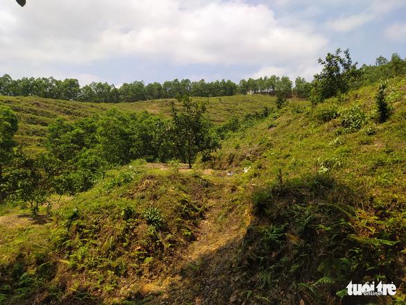 Vụ giao, 'mượn' đất rừng sai quy định ở Hà Tĩnh: Kỷ luật nhiều cán bộ xã - Ảnh 1.