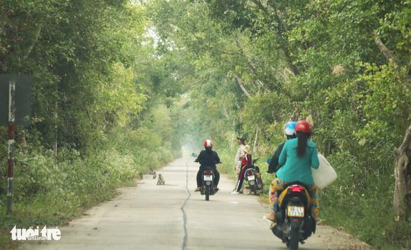 2 dự án khôi phục rừng tràm U Minh Thượng: Đụng đâu thấy sai nấy - Ảnh 2.
