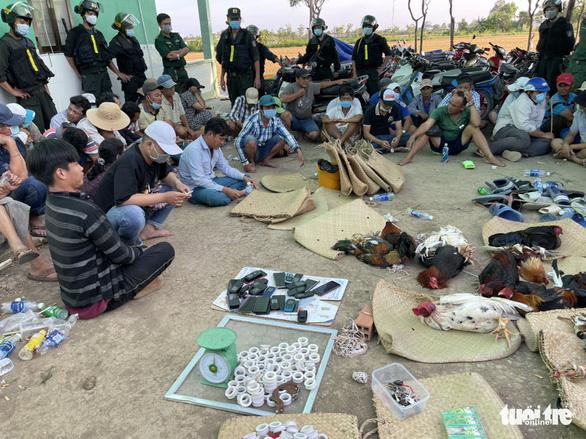 Che bạt để đá gà quy mô lớn ở Tiền Giang, 42 người bị bắt tại trận - Ảnh 1.