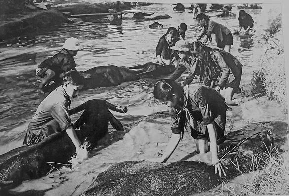 Đào Trình và những bức ảnh miền Bắc thời chiến còn mãi - Ảnh 2.