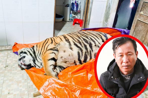 Khởi tố người đàn ông mua con hổ 2 tạ rưỡi về nấu cao - Ảnh 1.