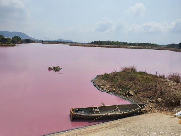 Đầm nước ở Bà Rịa - Vũng Tàu bỗng biến thành màu hồng tím - Ảnh 1.