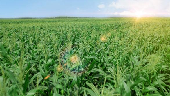 Ra mắt hệ thống trang trại sinh thái Vinamilk Green Farm - Ảnh 3.